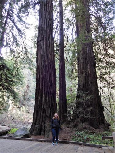 Redwoods 6